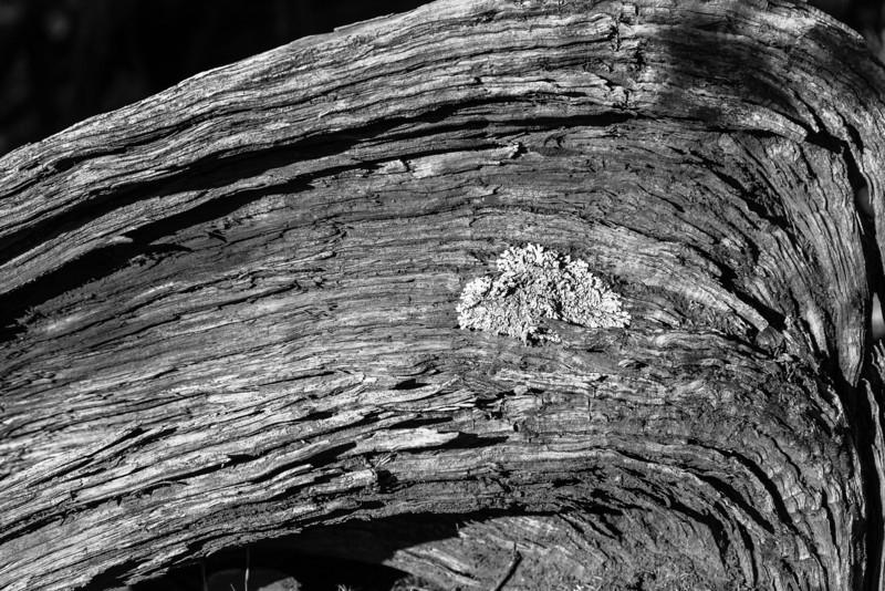 Lichen on wood