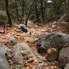 Wilson Canyon, Sedona