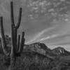 Catalina State Park, Tucson
