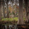 Statue and Cypress trees, Magnolia Plantation