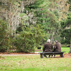 Couple, Magnolia Plantation