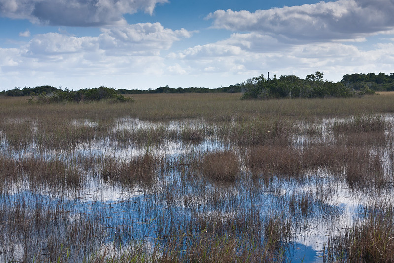 Saw grass prairie, Everglades