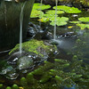 Pool, Lyon Arboretum