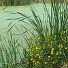 Pinckney Island pond