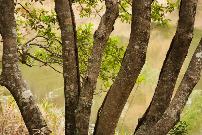Audubon Nature Preserve