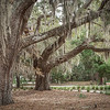 Live Oaks, Coastal Discovery Center