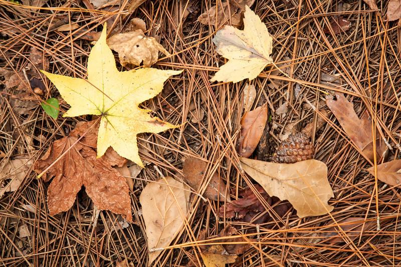 Forest floor, Audubon Nature Preserve