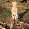 Dog on woodpile