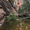 West Fork, Oak Creek Canyon