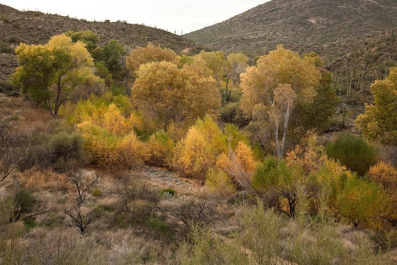 Jewel of the Creek Preserve near Carefree
