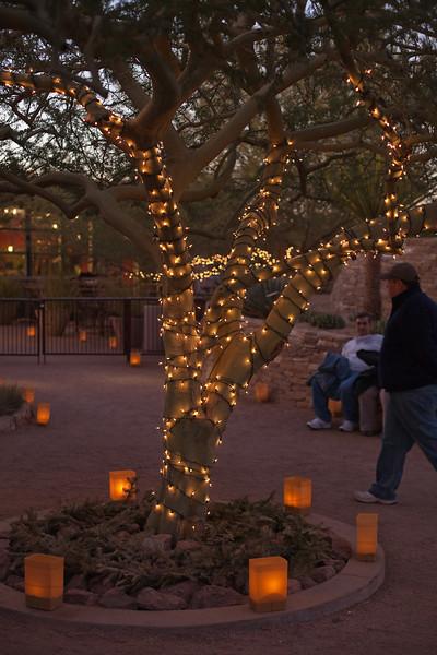 Las Noches de las Luminarias, Desert Botanical Garden