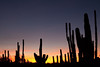 Sunset at the Desert Botanical Garden