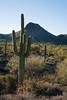 Saguaro, Apache Trail