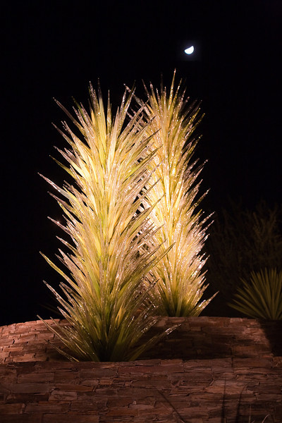 Dale Chihuly glass sculptures at Las Noches de las Luminarias, Desert Botanical Garden