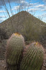 Barrel Cactus and Hill