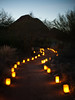 Las Noches de las Luminarias, Desert Botanical Museum