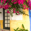 Bougainvillea over doorway