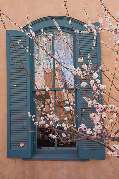 Flowering tree and window, Santa Fe