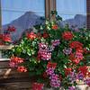 Geraniums, mountain reflections