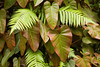 Ferns and philodendron
