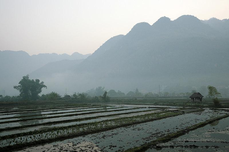 Rice-paddies,-Mai-Chau