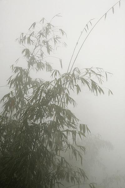 Grass-in-fog-1