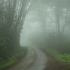 Foggy Lane