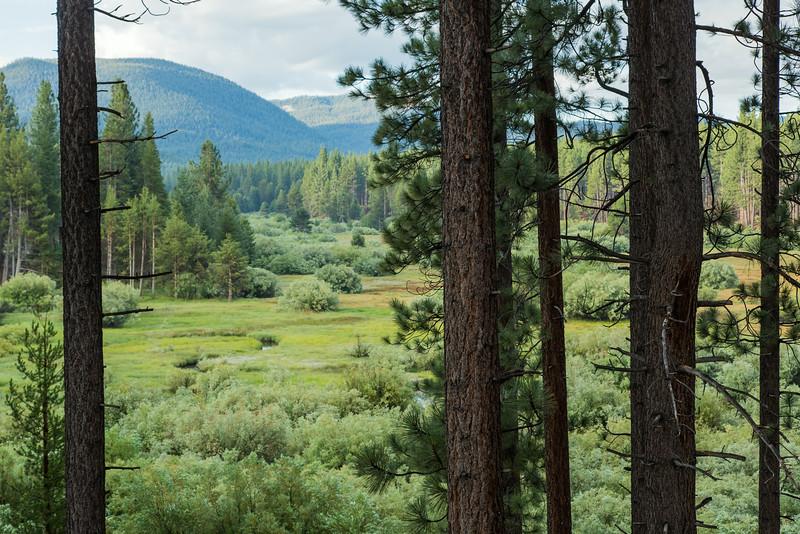 South Lake Tahoe Meadow