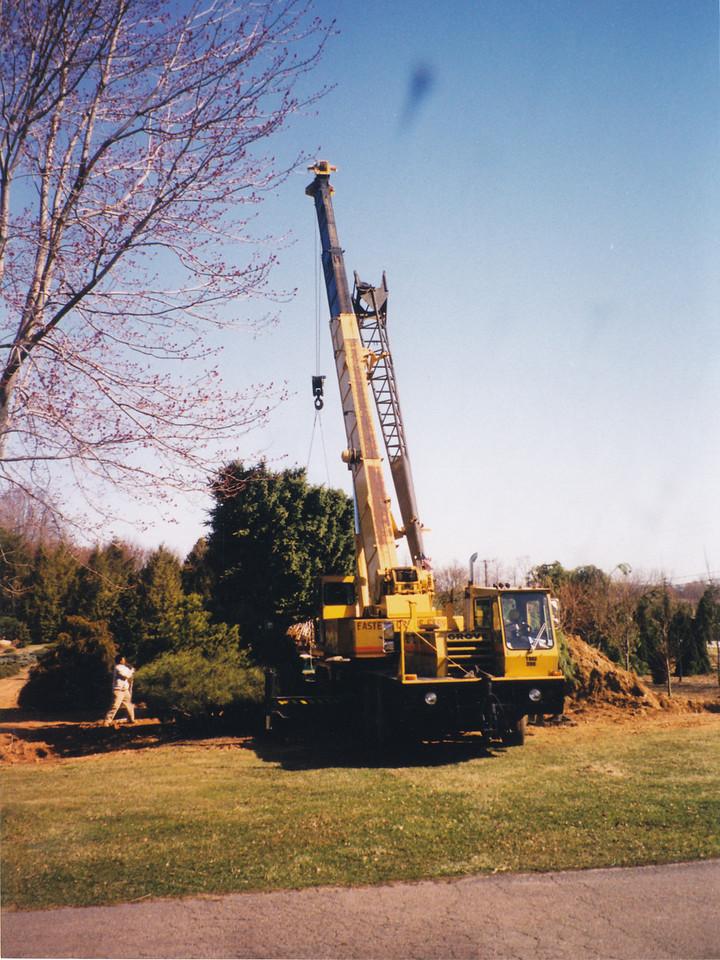 Large crane moving tree