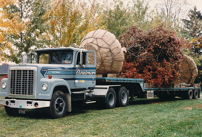 Transplanted tree transport