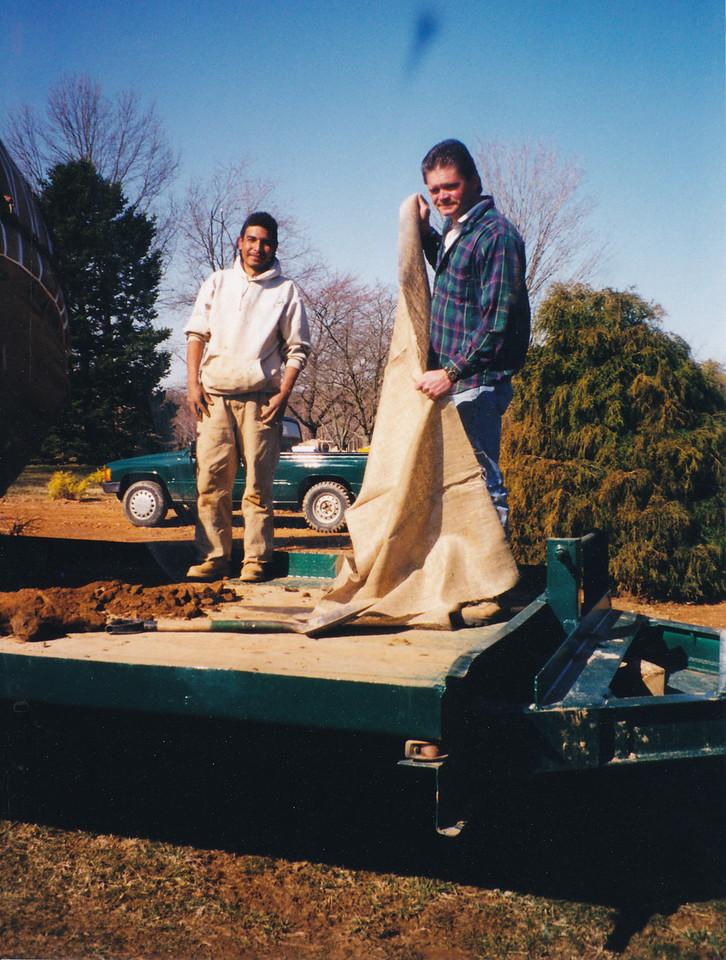 Russ & Co. preparing transplanted tree for transport