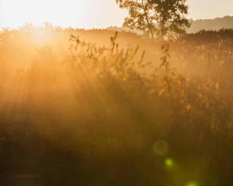 Sunrise over the prairie, UW Arboretum, Madison, WI