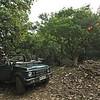 A tourist safari vehicle in Ranthambhore national park