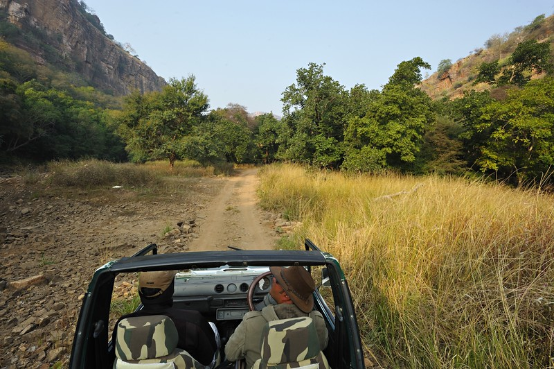 A four wheel drive car in the jungles of Ranthambhore national park