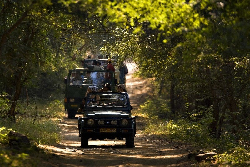 Tourist vehicles on a safari in Ranthambhore tiger reserve