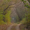 Jungles of Ranthambhore national park