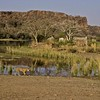 Tiger on the lake shore in Ranthambore tiger reserve  with the Ranthambhore fort in the background