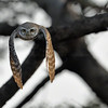 Highly Commended - Sanctuary Wildlife Photographer of the Year Award 2011