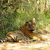 Male cub of T 19
