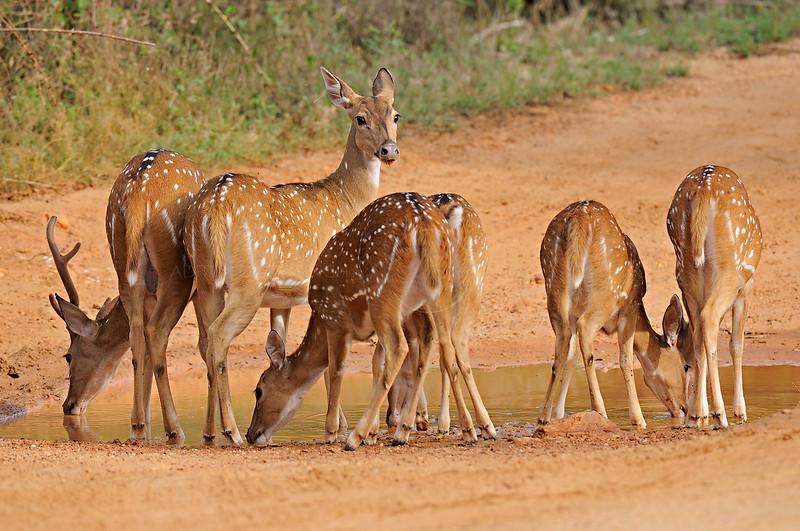 ADS_SriLanka_0000014095