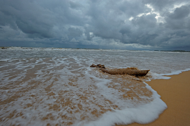 Log being washed over by a monsoon wave in Bentota beach in Sri Lanka