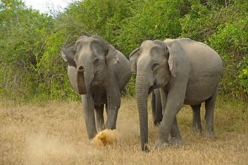 ADS_Sri Lanka_000052741