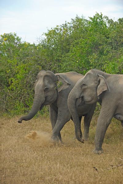 ADS_Sri Lanka_000052772