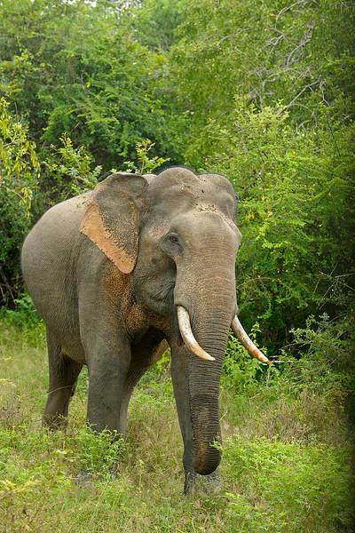 ADS_Sri Lanka_000052117
