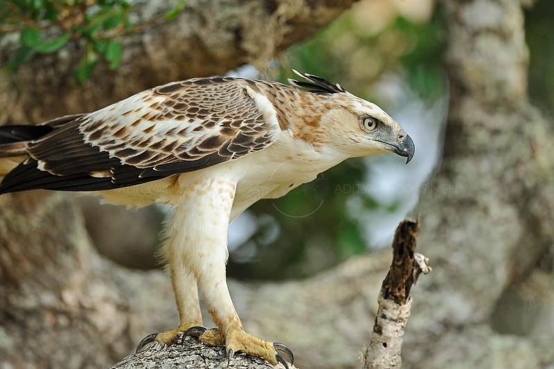 ADS_Sri Lanka_000051943
