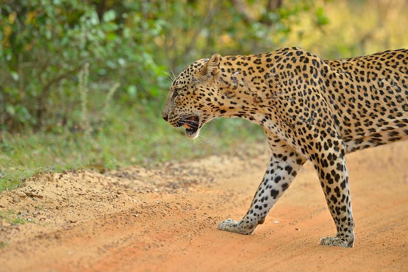 ADS_Sri Lanka_000052592
