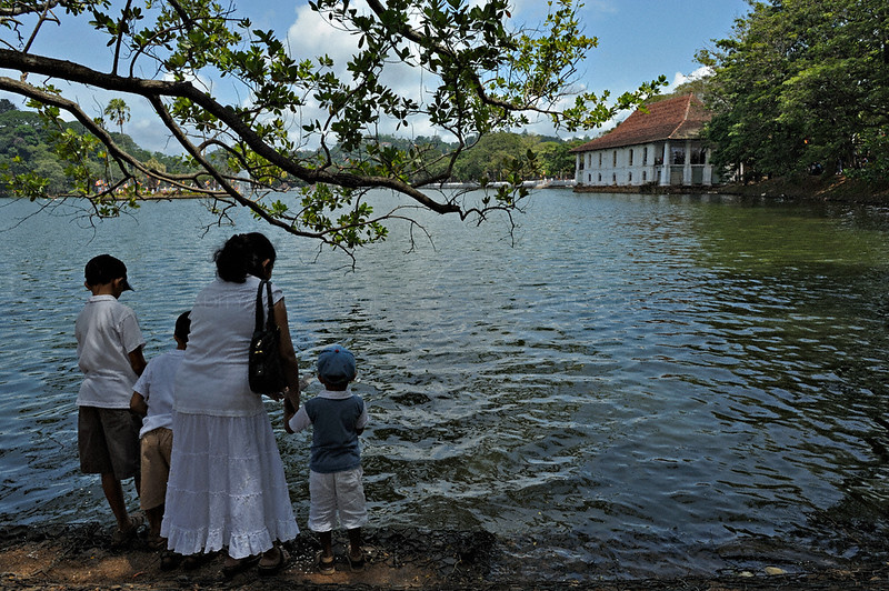 Pligrims feeding fish in the Kandy lake near the Sri Dalada Maligawa or temple of the tooth relic in Kandy, Sri Lanka