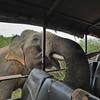 ADS_Sri Lanka_000052187