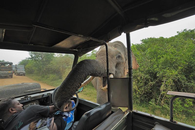 ADS_Sri Lanka_000052125