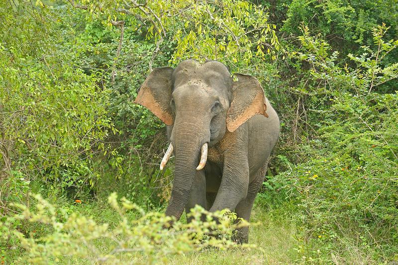 ADS_Sri Lanka_000052111